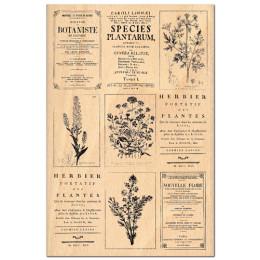 Tampon bois HERBIER par Florilèges Design. Scrapbooking et loisirs créatifs. Livraison rapide et cadeau dans chaque commande.