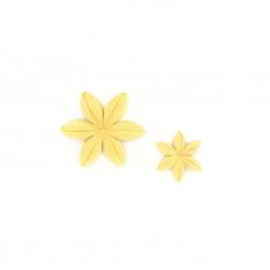 Fleurs Mimosa